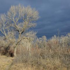Сияние деревьев