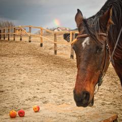 Берта и яблоки