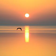 Рассвет с птицей