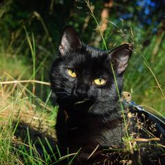 Тишка в траве
