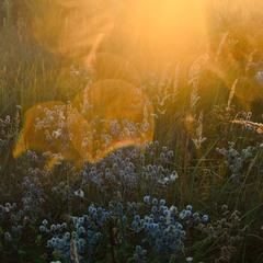 Близость утреннего солнца