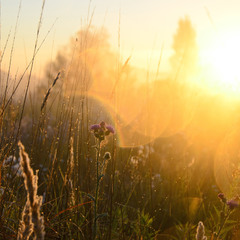 Рассветное чудо травы