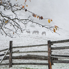 Внезапная зима в Дземброне