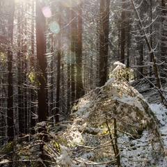 Зимняя сказка закарпатского леса