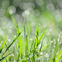 Волшебное утро травы