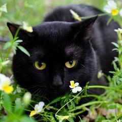 Портрет в цветочках