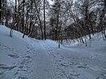 Доріжка в зимовому парку