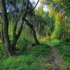 Ранок на лісовій стежці