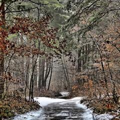 Змерзла лісова дорога