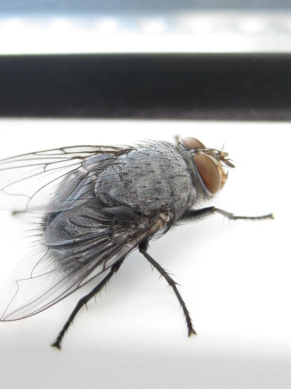 результате покажи картинки мухи уже