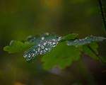 Після дощу...