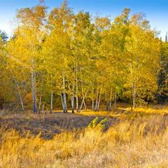Осенний лес №1