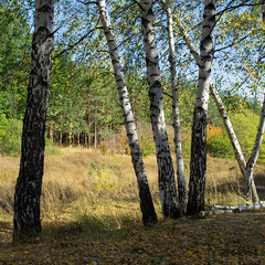 Осенний лес №2