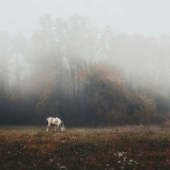 В тумані...