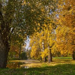 Жовтогаряча осінь