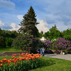 У весняному саду