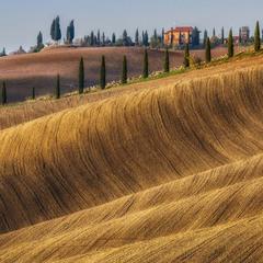 Золоті поля Тоскани
