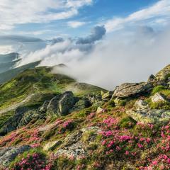 Когда горы источают аромат
