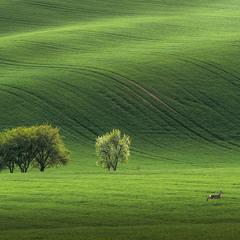 Пейзаж с убегающей косулей