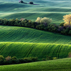 Моравские линии