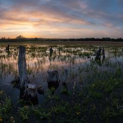 Вечір на болоті