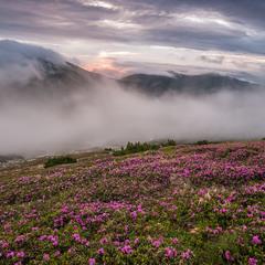 Рододендроновый туман