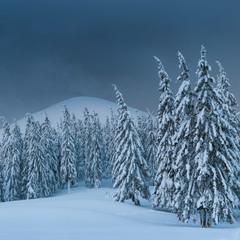 Справжня зима