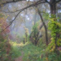 Ранок чарівного лісу