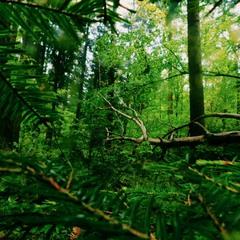 Ukrainian green forest