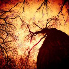 цікаві прекрасні моменти фото перебувають у чарівних лісах природи