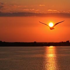Неся на крыльях солнце