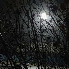 Свет вечернего фонаря