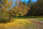 Золотіє осінь, осінь золотіє