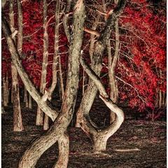 Червоний ліс ховає казку…