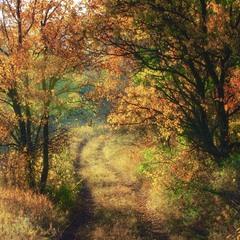 Дорога у чарівну осінь