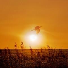 Жар - птиця