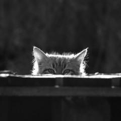 А де наш котик?