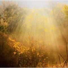 Золота осінь.