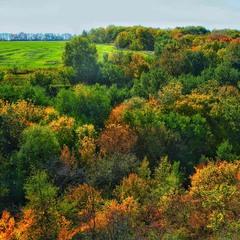 Тихо осінь ходить гаєм.