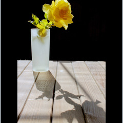Троянда жовта - квітка це надії…