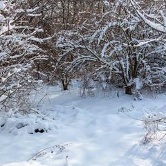Зима-фотограф проявляє плівку.