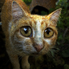 Рыжий кот, жрать просящий