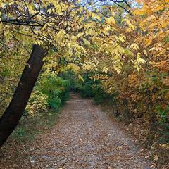 Осеннею тропою