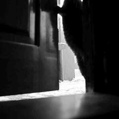 """Войти можно..? ( Из серии """"Нашествие котов"""". Снимок 1 )"""