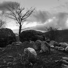 Сад камней..