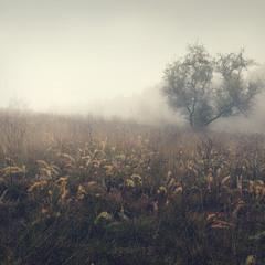 На туманных холмах...