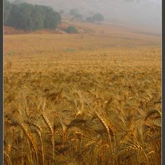 Деревенские картинки.Урожай