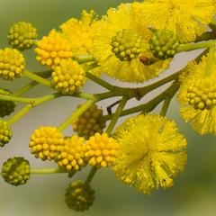 Весна в желто-зеленных тонах