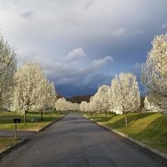 Торжество весны