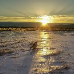 Соколиная охота, зимний день